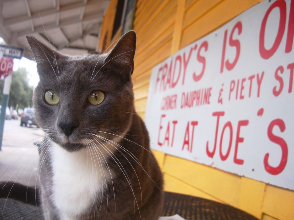 Sparky The Cat In New Orleans 9th Ward